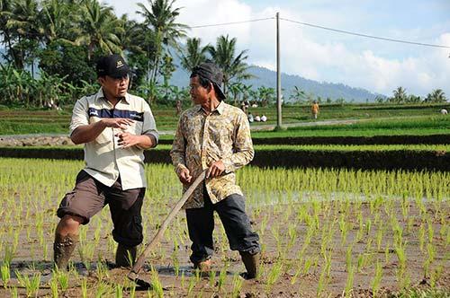 agpeduli-harvest